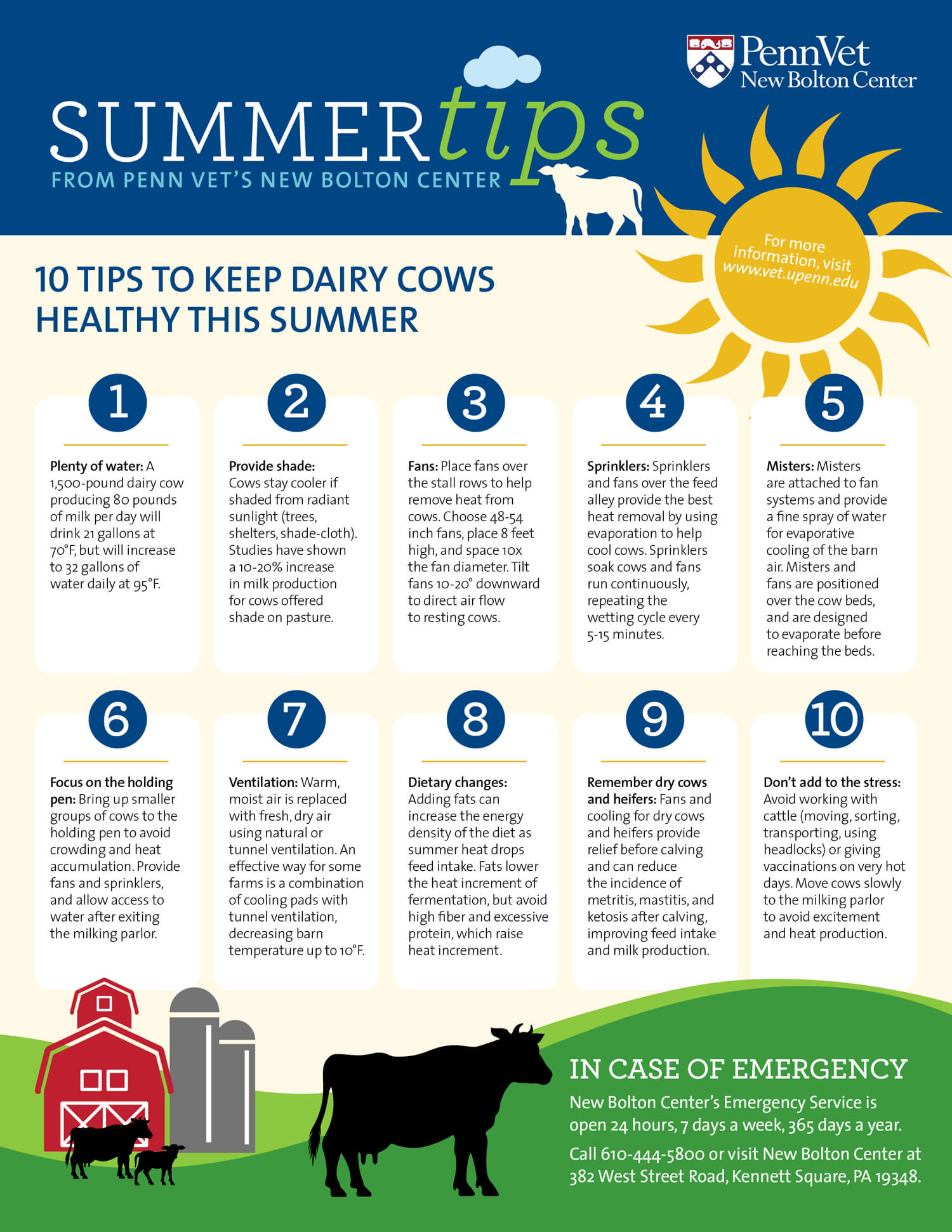 summer heat tips for cows