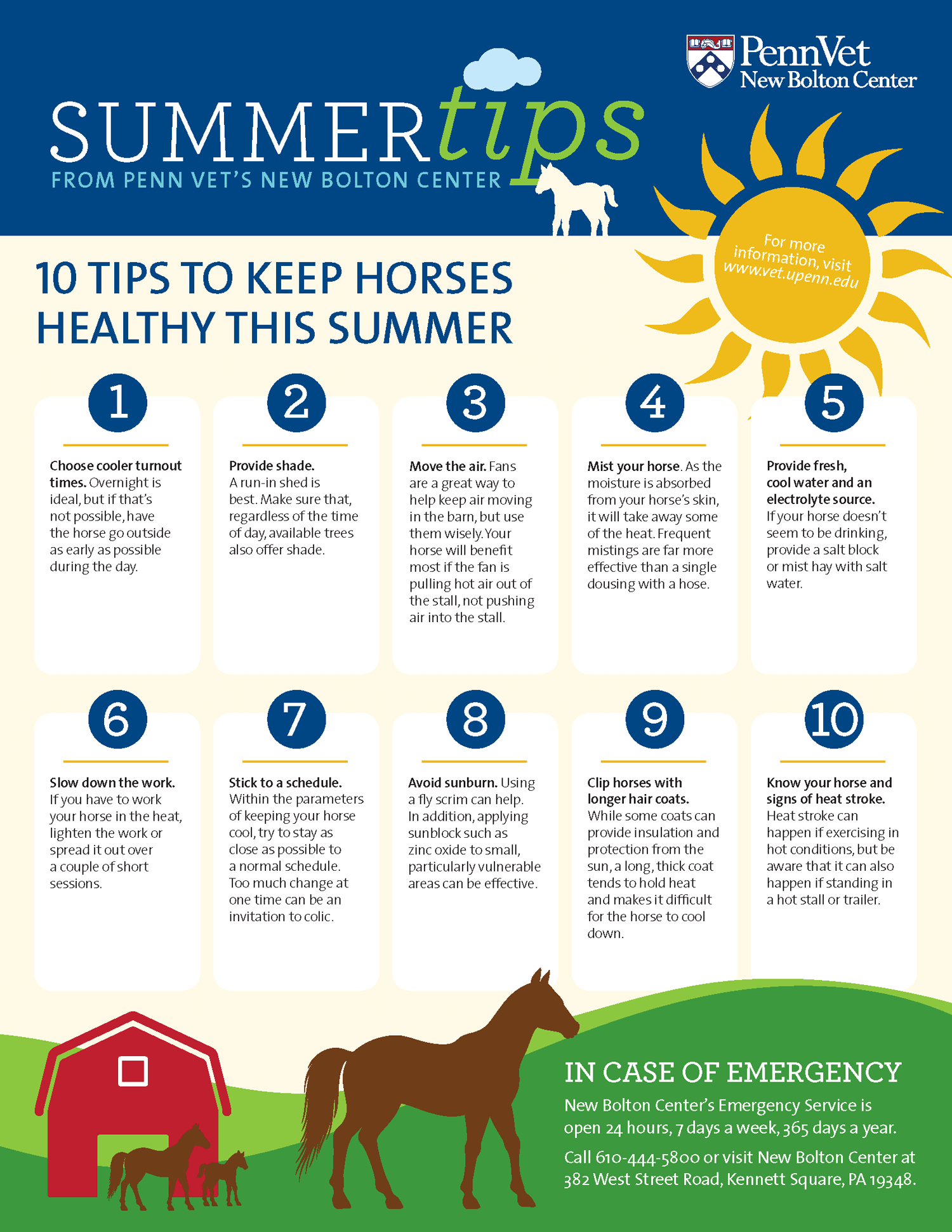 Summer Heat Tips for Horses