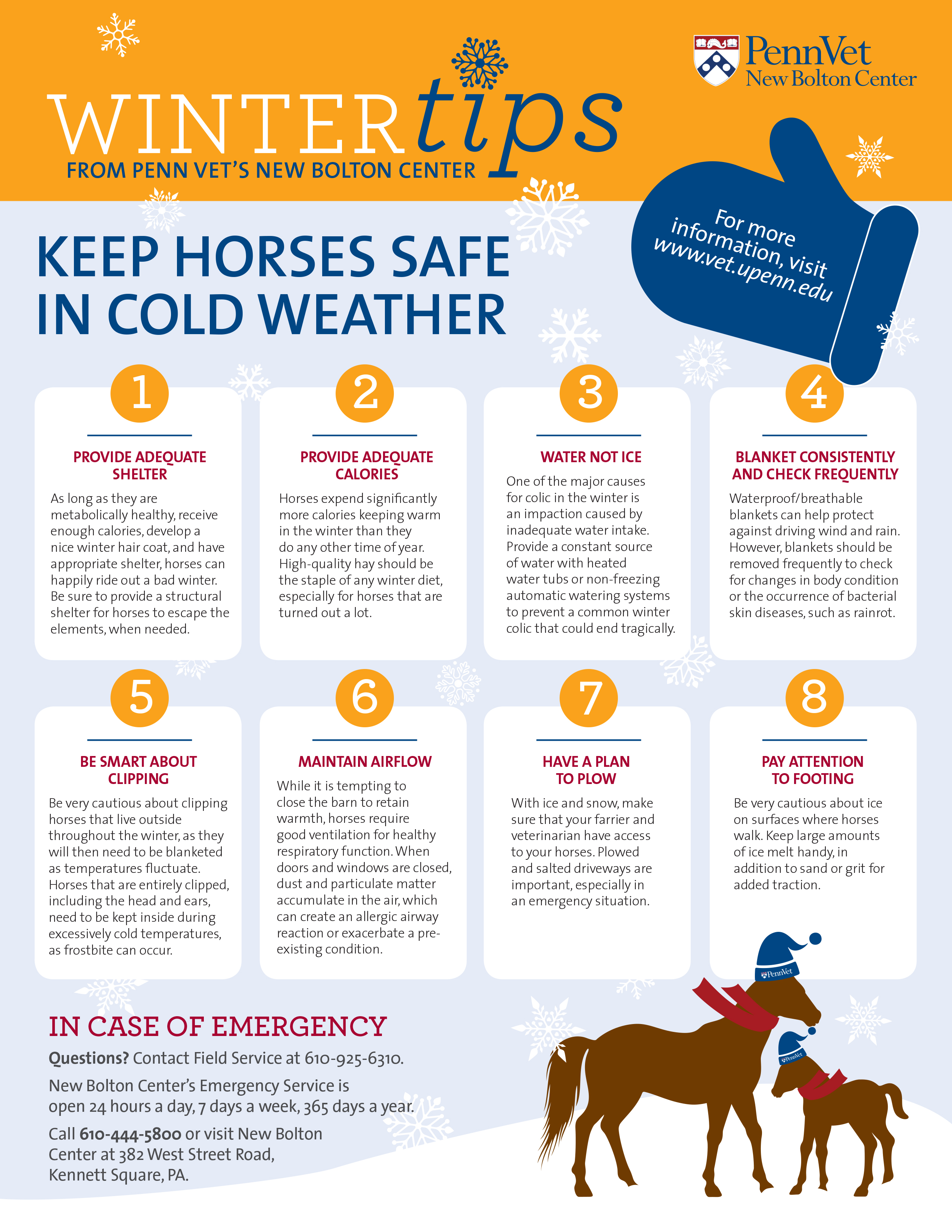 Penn Vet Winter Tips for Horses