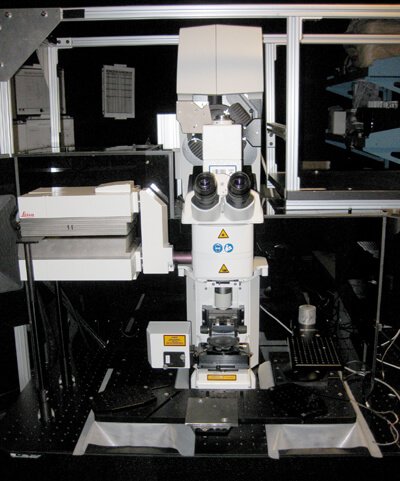 SP5 Multiphoton microscope