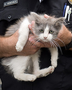 Rescued cat getting treatment