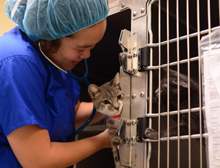 shelter medicine clinical with cat