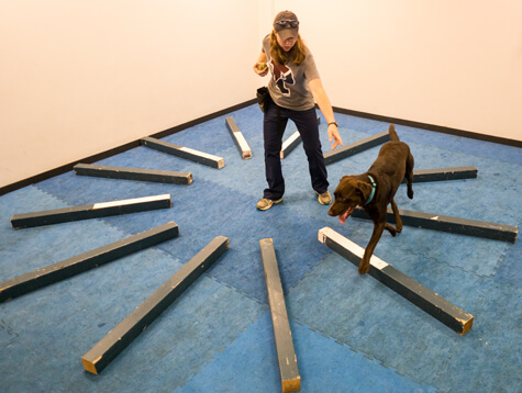 Agility Training at the Working Dog Center