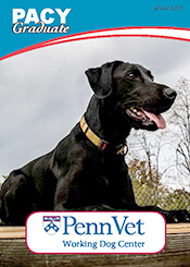 Pacy, Penn Vet Working Dog