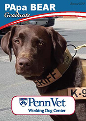 PApa Bear, Penn Vet Working Dog