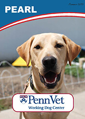 Pearl, Penn Vet Working Dog