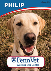 Philip, Penn Vet Working Dog