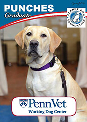 Punches, Penn Vet Working Dog