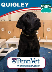Quigley, Penn Vet Working Dog