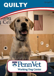 Quilty, Penn Vet Working Dog