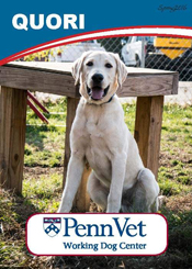 Quori, Penn Vet Working Dog