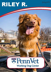 Riley, Penn Vet Working Dog