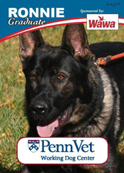Ronnie, Penn Vet Working Dog