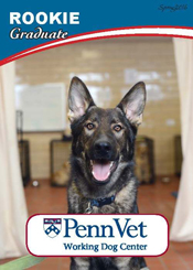 Rookie, Penn Vet Working Dog