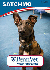 Satchmo, Penn Vet Working Dog