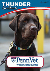 Thunder, Penn Vet Working Dog