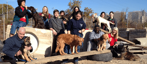 Thanksgiving at the Working Dog Center