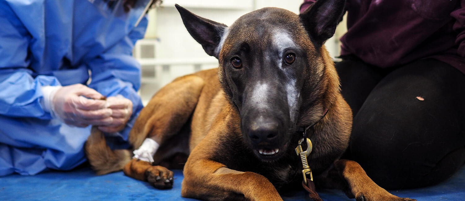 Opioids such as Fentanyl can also harm first responders, like our working canines.