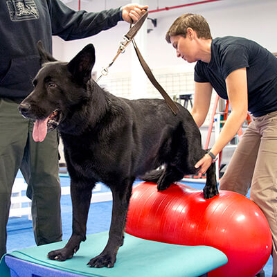 Performance Medicine for K9s