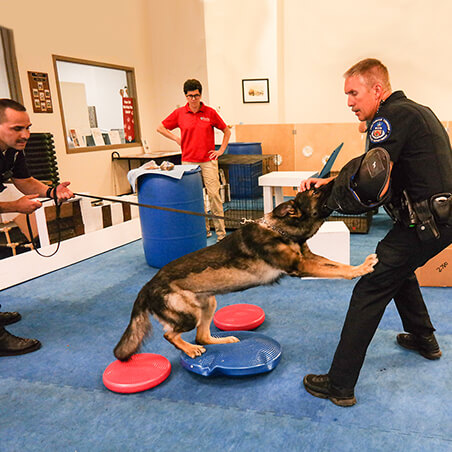 K9 Law Enforcement-Performance Medicine