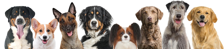 PennGen Dog Breeds