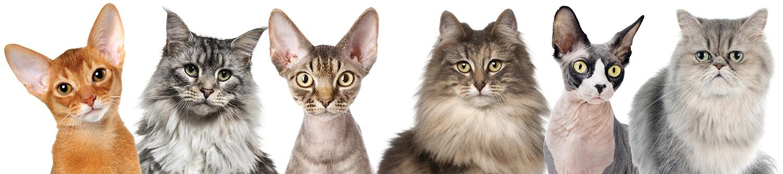 PV PennGen Header Cats