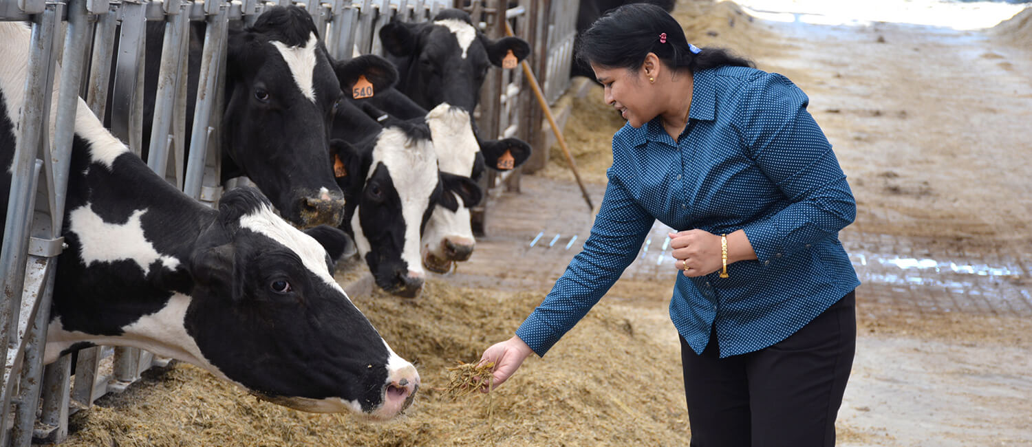 Dr. Dipti Pitta is at work on a project that could lead to reductions in methane emissions from dairy cattle.