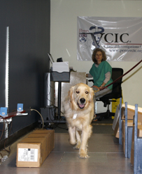 Veterinary Clinical Investigations Center