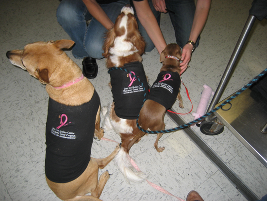 PV K9 Mammary Tumor Program