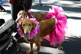 Penn Vet canine breast cancer survivor