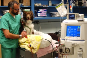 Dr. Foster and patient, Penn Vet Nephrology