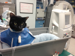 Elvis, Hemodialysis Patient at Penn Vet