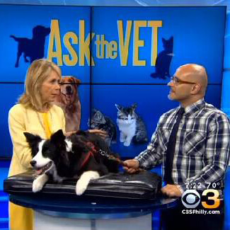 Penn Vet behavior medicine in the news