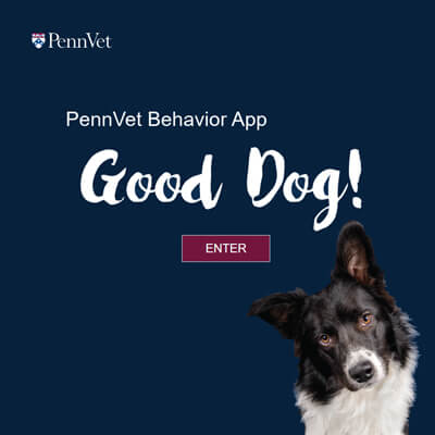 Penn Vet Behavior Telemedicine