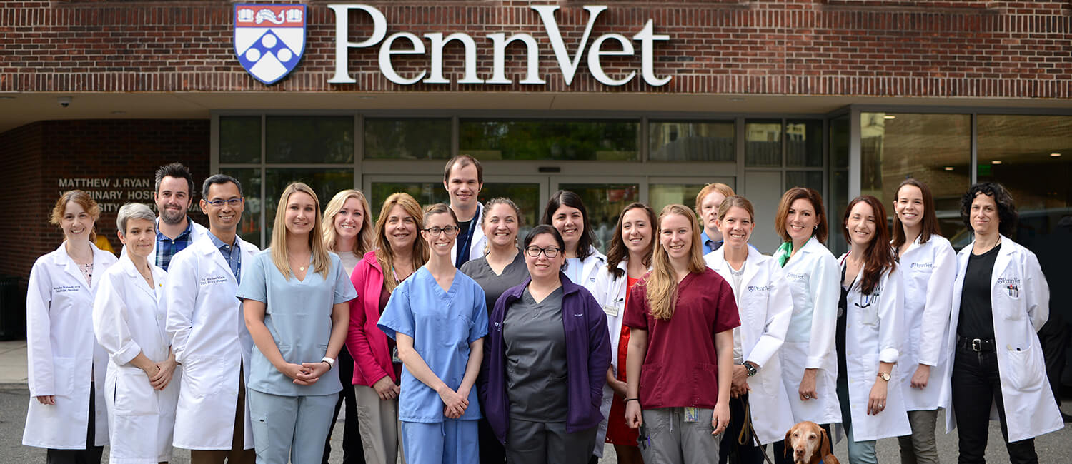 Penn Vet Comprehensive Cancer Care Team