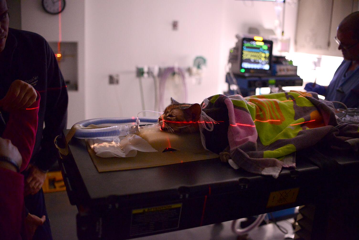 Penn Vet Radiation Oncology measurements
