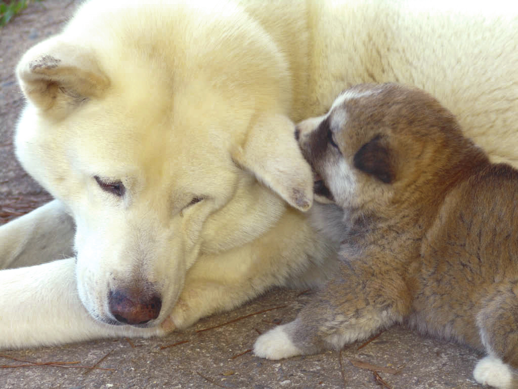 puppy and mom