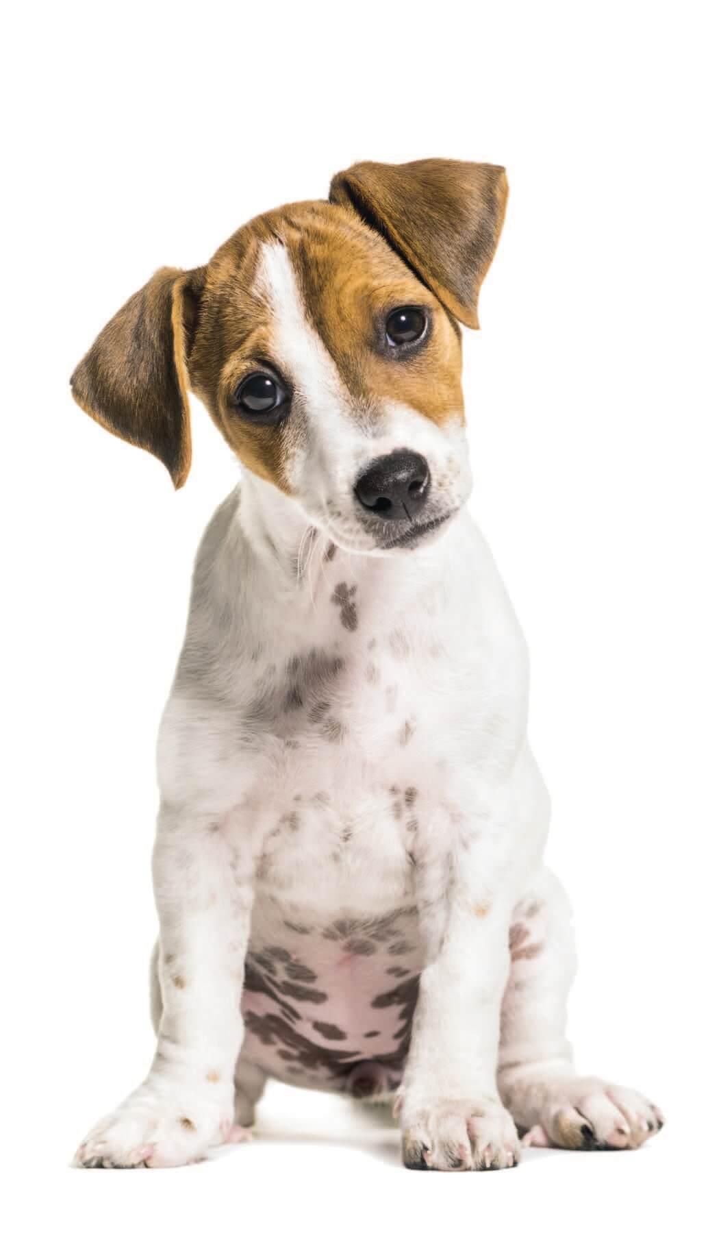 Puppy for Breeder Seminar
