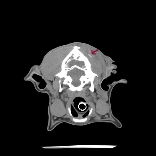 (a) German Shepherd Cranium